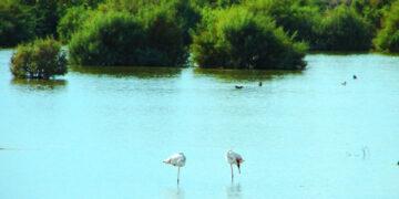 προστατεύει τη λίμνη Ορόκλινης
