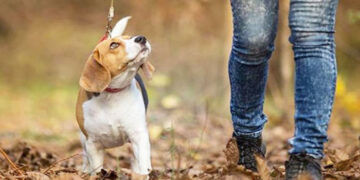 Μέσω διαδικτύου η έκδοση ή ανανέωση άδειας κατοχής σκύλου στο Δήμο Στροβόλου